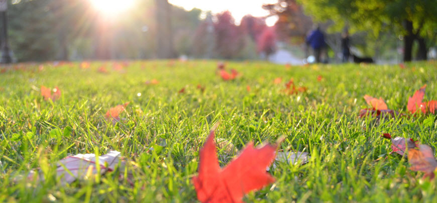 fall leaves grass lawn care