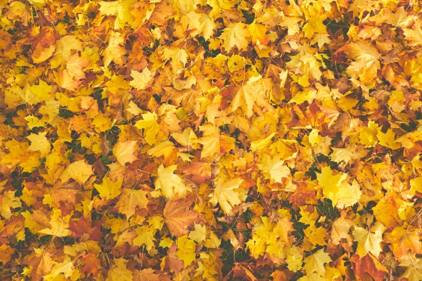 Transition Your Yard From Summer to Fall