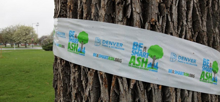 tree wrapped in smart ash banner