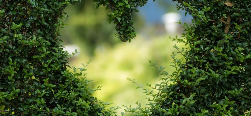 landscaping privacy hedge heart