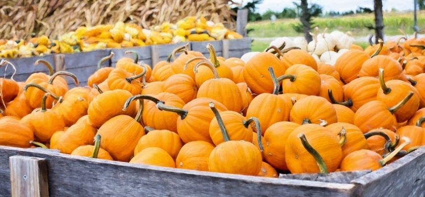 Pumpkins patch cart - Colorado Halloween events