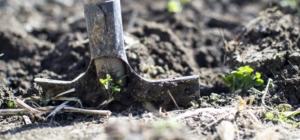 winter garden shovel dirt green sprouting