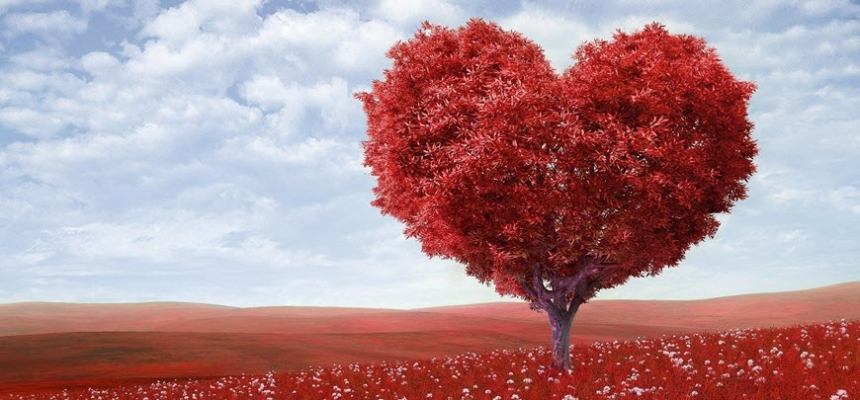romantic park red heart shaped tree